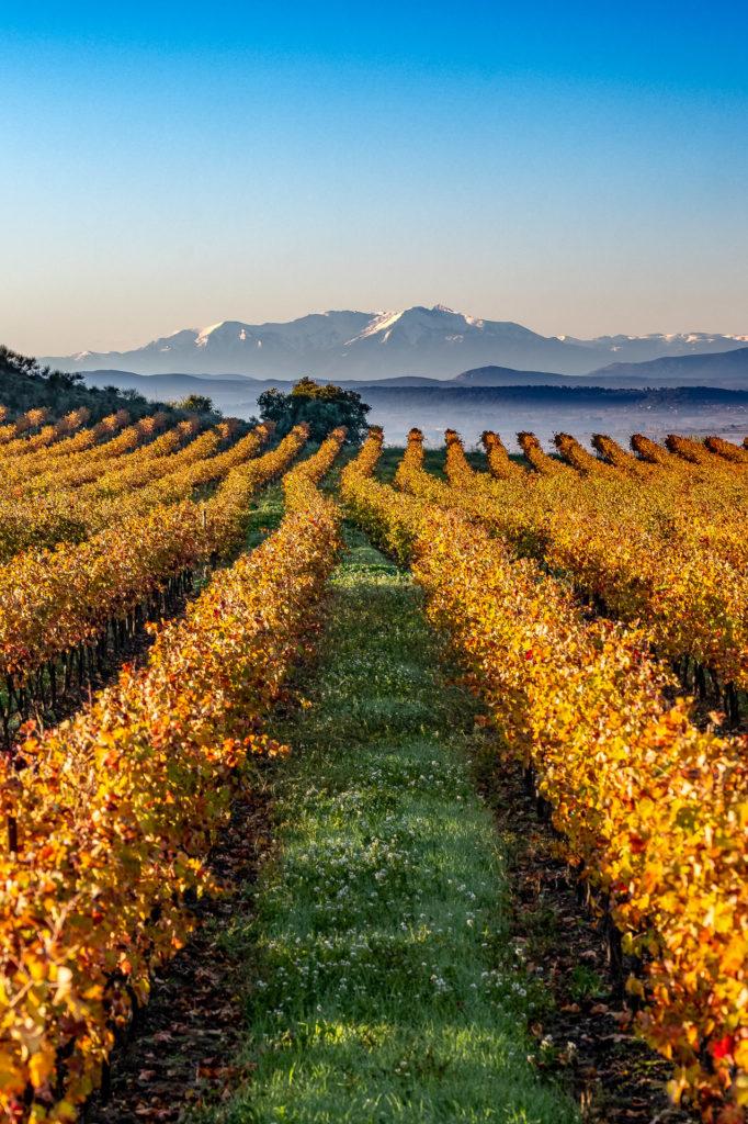 Couleurs d'automne dans les vignes et premières neige dans les Pyrénées