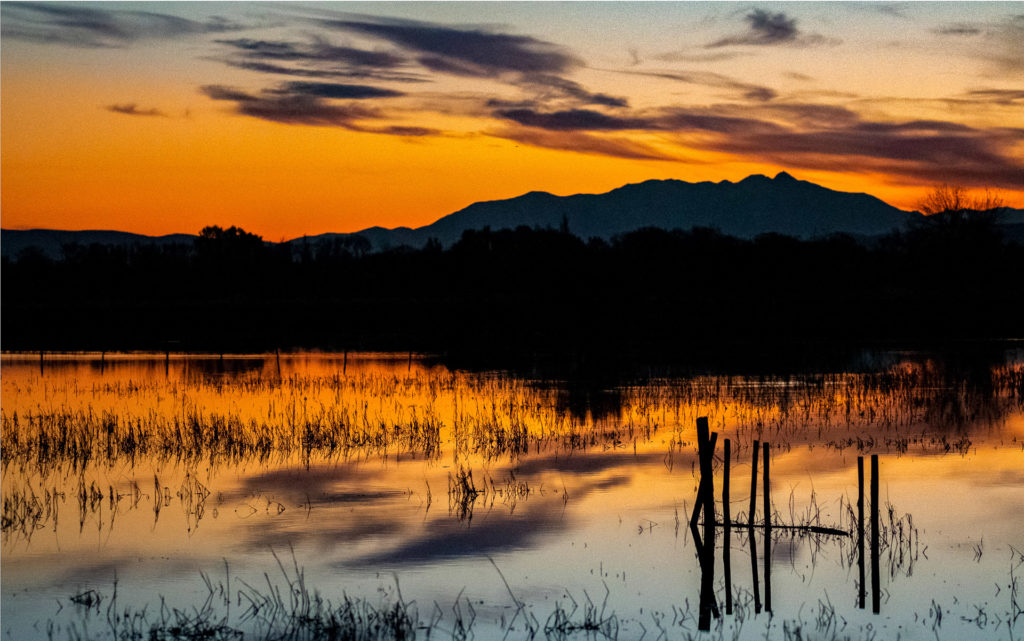 Crépuscule sur l'étang de Capestang