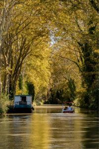 Sous la voute arborée du Canal du Midi