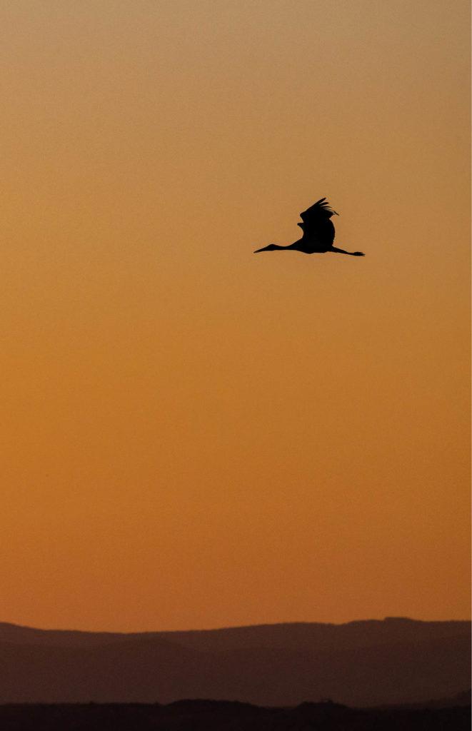 Vol de Cigogne noire