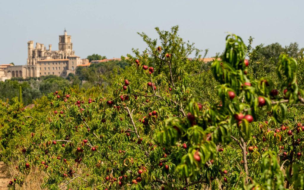 Verger à proximité de la Cathédrale Saint-Nazaire de Béziers