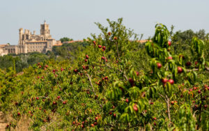 Verger à proximité de la Cathédrale St Nazaire