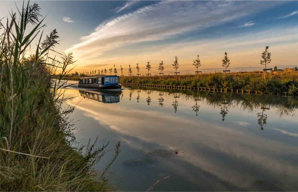 Jeunes plantations le long du Canal du Midi